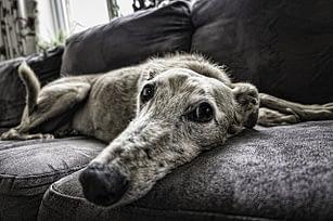 Chronisch krank: Auf der Suche nach dem vergrabenen Hund